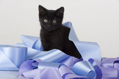 Cute black kitten playing in pile of ribbon Royalty Free Stock Image