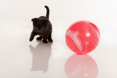 Cute black kitten playing with red ball Stock Image
