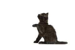 Cute black kitten on  a white background Stock Photography
