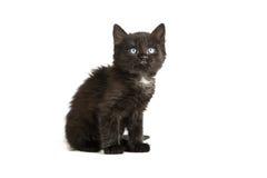 Cute black kitten on  a white background Stock Photos