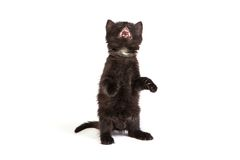 Cute black kitten on  a white background Stock Image