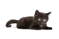 Cute black kitten on  a white background Stock Images