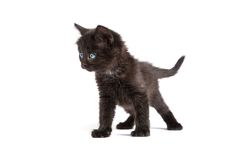 Cute black kitten on  a white background Royalty Free Stock Photos