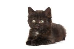 Cute black kitten on  a white background Stock Photo