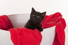 Cute black kitten in white tub with red blanket Royalty Free Stock Photo