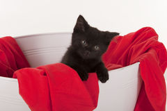 Cute black kitten in white tub with red blanket Stock Photos