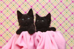 Cute Black Kittens on Pink Pretty Background Royalty Free Stock Photos