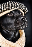 Cute black mutt. Cute mutt wearing a vintage hat and a shawl Royalty Free Stock Images