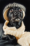 Cute black mutt. Cute mutt wearing a vintage hat and a shawl looking up Stock Images