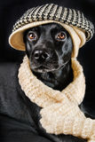 Cute black mutt. Cute mutt wearing a vintage hat and a shawl Royalty Free Stock Image