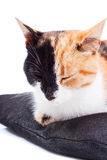 Cute Black and Red Cat Royalty Free Stock Photography