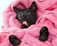 Cute black soggy cat licking after a bath, funny little demon. Cute black soggy cat licking after a bath, drying off with a towel Stock Photos
