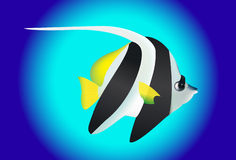 Cute black and white angel fish Stock Photos