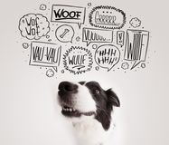 Cute dog with barking bubbles. Cute black and white border collie with barking speech bubbles above her head Stock Image