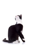 Cute black and white cat Stock Photography