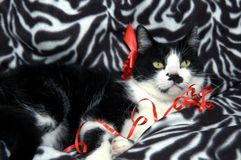 Cute black and white cat. Portrait of cute back and white cat with red bow and curly ribbon relaxing on cushion Royalty Free Stock Photo