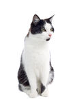 Cute black and white cat. Isolated on white background royalty free stock photography