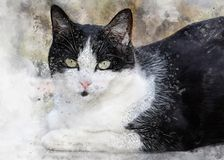Cute black and white cat with big eyes. Portrait of pet. Realistic drawing of kitten on watercolor background royalty free stock images