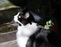 Cute black and white cat. Looking away royalty free stock photography
