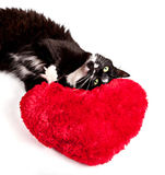 Cute black-white cat and heart-formed pillow Stock Photo