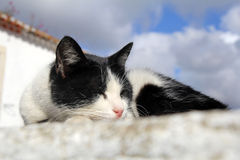 Cute black and white cat Royalty Free Stock Photo