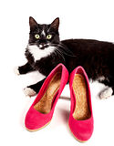 Cute black-white cat with women's shoes Stock Images