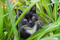 Cute black and white cat in the grass Royalty Free Stock Image