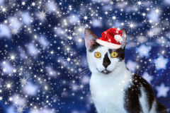 Cute black and white christmas cat Royalty Free Stock Photos