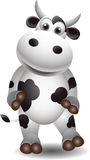 Cute  black and white cow Royalty Free Stock Image