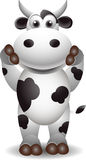 Cute  black and white cow Stock Images