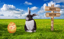 Cute black white rabbit on green meadow on a sunny day. stock image