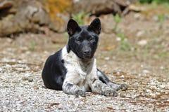 Cute Black and White Street Dog Stock Photo