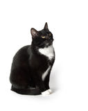 Cute tuxedo cat on white. Cute black and white tuxedo cat on white background Royalty Free Stock Photography