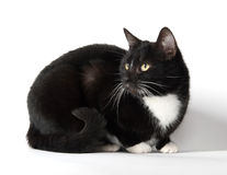 Cute tuxedo cat on white. Cute black and white tuxedo cat on white background royalty free stock images