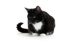 Cute tuxedo cat on white. Cute black and white tuxedo cat on white background royalty free stock photos