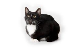 Cute tuxedo cat on white. Cute black and white tuxedo cat on white background stock photo