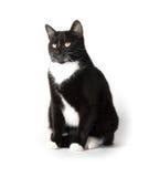 Cute tuxedo cat on white. Cute black and white tuxedo cat on white background stock images