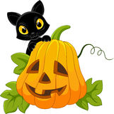 Cute blank cat with Halloween pumpkin Royalty Free Stock Images