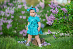 Cute blond baby girl enjoying time on a awesome place between lilac syringe bush.Young lady with basket full of flowers dressed in. Jeans and stylish shirt Stock Image