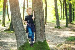 Cute blond boy playing between tree trunks in sunny park. Royalty Free Stock Images
