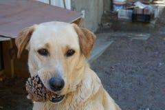 Cute blonde dog stock photo
