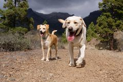 Cute blonde dogs in the nature Stock Images