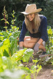 Cute blonde gardening on sunny day Stock Image