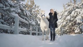 Young woman walks with a beautiful white horse leading her holding a stirrup over a snow-covered country ranch. Cute blonde walks with a beautiful white horse stock video