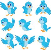 Cute blue bird cartoon Royalty Free Stock Images