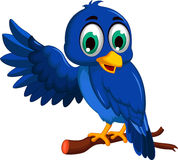 Cute blue bird cartoon presenting Stock Image
