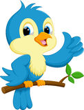 Cute blue bird cartoon Stock Image