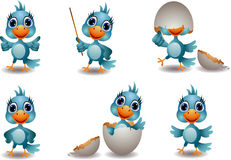 Cute blue bird collection Stock Photography
