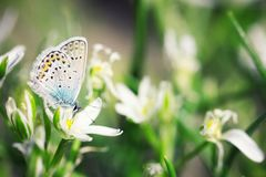 Cute blue butterfly sitting on royalty free stock photo