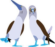 Cute Blue-footed booby vector. Cute Blue-footed booby couple cartoon vector vector illustration